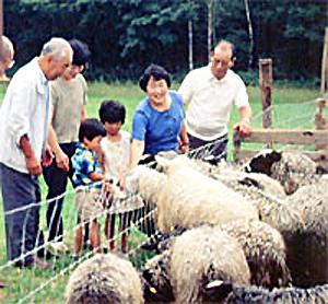 国産羊肉 松山農場 ジンギスカン