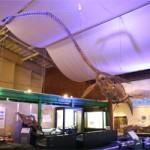 エコミュージアムセンターで化石体験