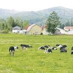 北ぎゅう舎のチーズ
